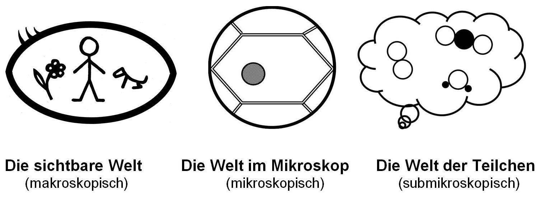 5. Klasse Skript 3: spezielle Didaktik Biologie | www.bio-nickl.de