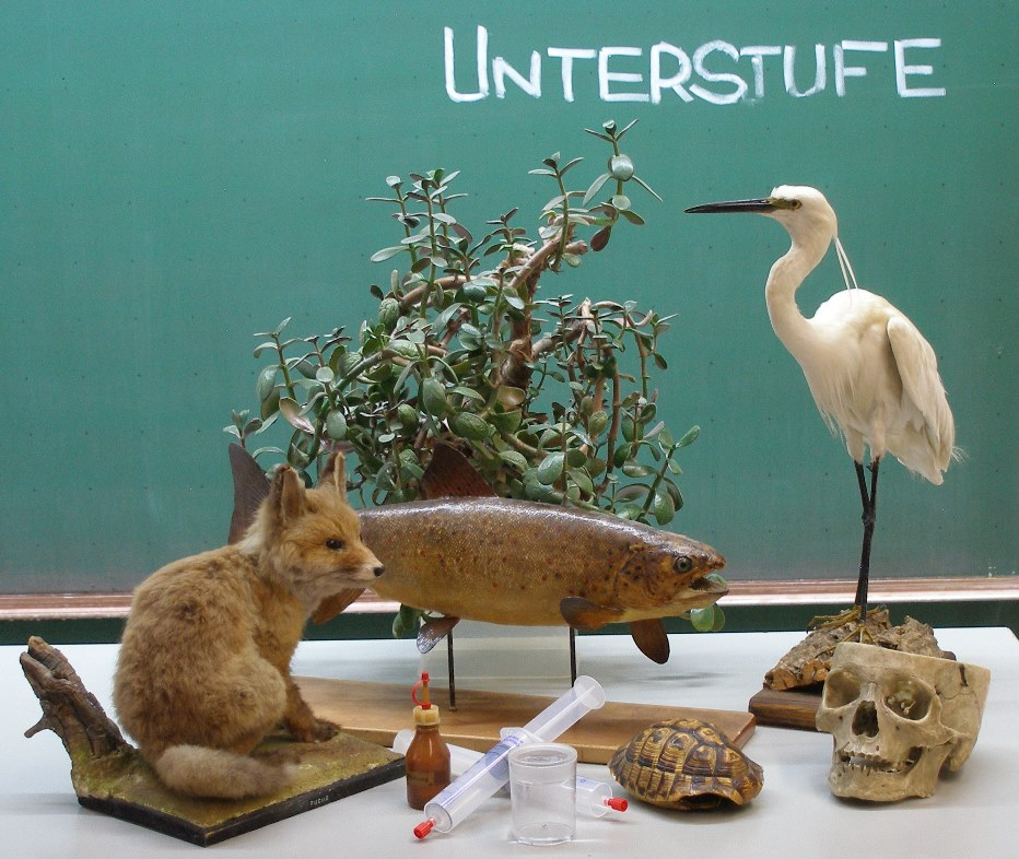 Materialien Unterstufe Natur und Technik LehrplanPLUS | www.bio-nickl.de